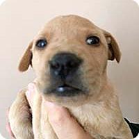 Adopt A Pet :: Wanderers Willow - Chantilly, VA