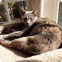 Adopt A Pet :: Marbles - Orange, CA