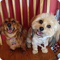Adopt A Pet :: Lily & Zouzou *bonded pair* - Fenton, MO