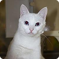 Adopt A Pet :: Serafina - Farmingdale, NY