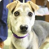 Adopt A Pet :: Sydney - Dover, OH