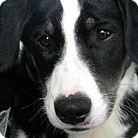 Adopt A Pet :: Lanta - Monteregie, QC
