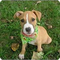 Adopt A Pet :: Will - Glastonbury, CT