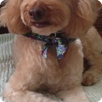 Adopt A Pet :: Skip - Culver City, CA
