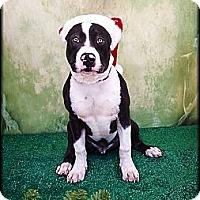 Adopt A Pet :: Wilber - Scottsdale, AZ