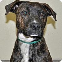 Adopt A Pet :: Henessey - Port Washington, NY