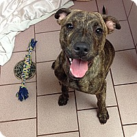Adopt A Pet :: Eli - Miami, FL