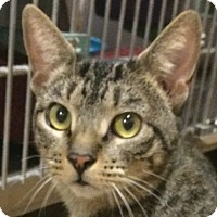Adopt A Pet :: Leia - Winchester, CA