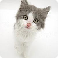 Adopt A Pet :: Dexter - Brockton, MA