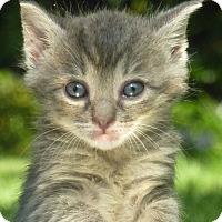 Adopt A Pet :: Luna - Stanford, CA