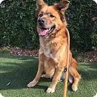 Adopt A Pet :: Delilah - Los Angeles, CA