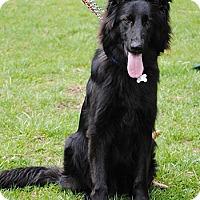 Adopt A Pet :: Loki - Mt. Airy, MD