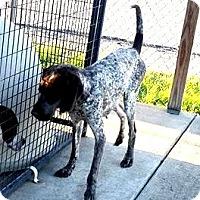 Adopt A Pet :: Lyra - Lewisburg, TN