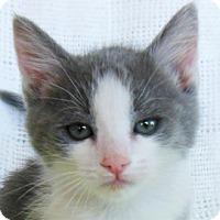 Adopt A Pet :: Buster - Redondo Beach, CA
