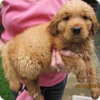 Adopt A Pet :: Buddah - Rocky Hill, CT