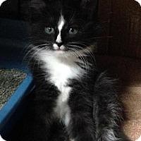 Adopt A Pet :: Ella - Furlong, PA