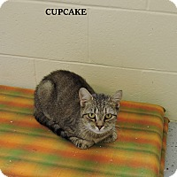 Adopt A Pet :: Cupcake - Washington, GA