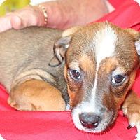 Adopt A Pet :: Reese - Umatilla, FL