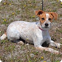 Adopt A Pet :: Ally - Larned, KS