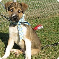 Adopt A Pet :: I'M ADOPTED Barley - Oswego, IL