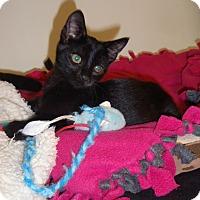 Adopt A Pet :: Nytro - Cannon Falls, MN