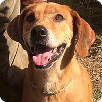 Adopt A Pet :: Rudy - Slidell, LA