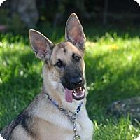 Adopt A Pet :: Charlie - Mira Loma, CA