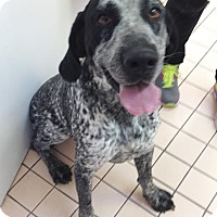 Adopt A Pet :: Sounder - Newburgh, IN