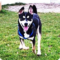 Adopt A Pet :: Rocko - Belleville, MI