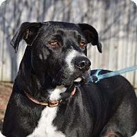 Adopt A Pet :: Cookie - Springfield, MA