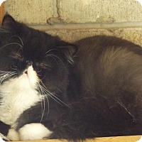 Adopt A Pet :: Harry - Zaleski, OH