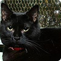 Adopt A Pet :: Paula - Lombard, IL