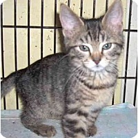 Adopt A Pet :: Merry - Colmar, PA