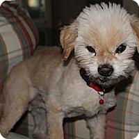 Adopt A Pet :: Corky - Salem, OR