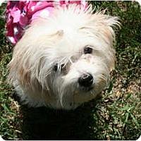 Adopt A Pet :: Luna - Lakewood, CO