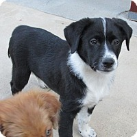 Adopt A Pet :: Twilight - Greeley, CO