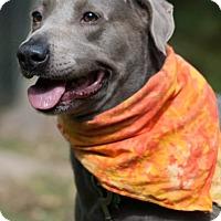 Adopt A Pet :: Willow - Salem, MA