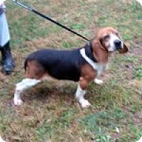 Adopt A Pet :: Bagels - Dumfries, VA
