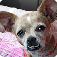 Adopt A Pet :: Blubell (8 lb) New Pics! - Sussex, NJ