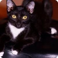 Adopt A Pet :: Mimi - La Canada Flintridge, CA