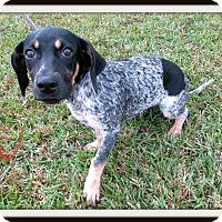 Adopt A Pet :: Emily - Charlemont, MA