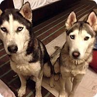Adopt A Pet :: Kodah - Zanesville, OH