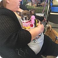 Adopt A Pet :: Lily - Brea, CA