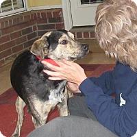 Shepherd (Unknown Type)/Australian Cattle Dog Mix Dog for adoption in Nesbit, Mississippi - Charlie