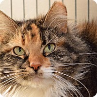 Adopt A Pet :: Chell - Middletown, OH