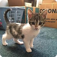 Adopt A Pet :: Taco - River Edge, NJ