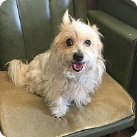 Adopt A Pet :: # 3 STRAY Avail.6/29 - Carrollton, OH
