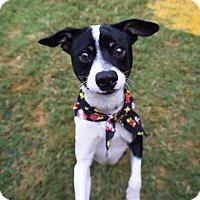 Adopt A Pet :: Waylon Jennings - Jersey City, NJ
