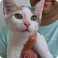 Adopt A Pet :: Ellie - Marina del Rey, CA
