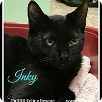 Domestic Shorthair Cat for adoption in Gonic, New Hampshire - Inky